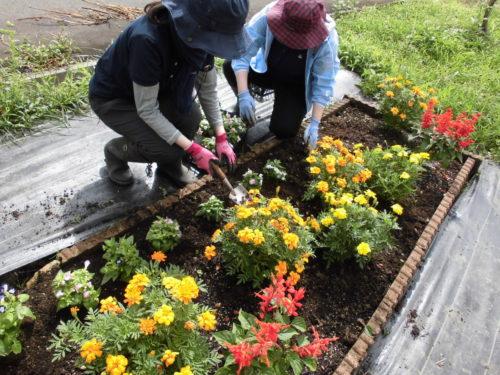 花壇整備の様子1